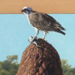 Osprey on Termite Mound by Andrew Denman