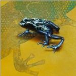 Dart Poison Frog by Andrew Denman