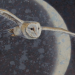 Barn Owl with Moon by Andrew Denman