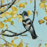 Belted Kingfisher by Andrew Denman