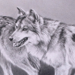 Mexican Wolves by Andrew Denman