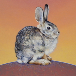 Desert Cottontail by Andrew Denman