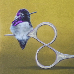 Costa's Hummingbird by Andrew Denman