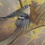 Ruby-Crowned Kinglet by Andrew Denman
