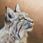 Bobcat by Andrew Denman