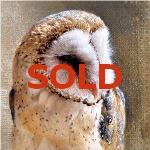 Barn Owl by Andrew Denman