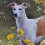 Whippet Portrait by Andrew Denman