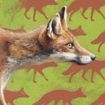 Fox by Andrew Denman