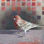 House Finch by Andrew Denman