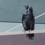 American Crows by Andrew Denman