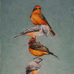 Vermilion Flycatchers by Andrew Denman
