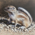 Antelope Squirrel by Andrew Denman