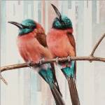 Carmine Bee-Eaters by Andrew Denman