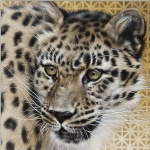Amur Leopard by Andrew Denman