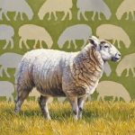 Sheep by Andrew Denman