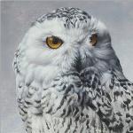 Snowy Owl by Andrew Denman