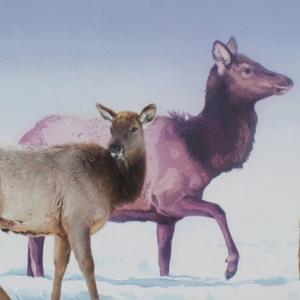Elk in Winter by Andrew Denman