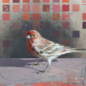Housefinch by Andrew Denman