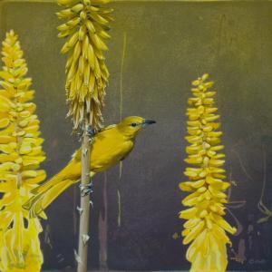 Orioles & Verdin on Aloe Vera by Andrew Denman