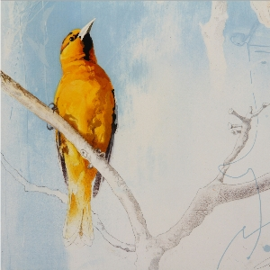 Orioles by Andrew Denman