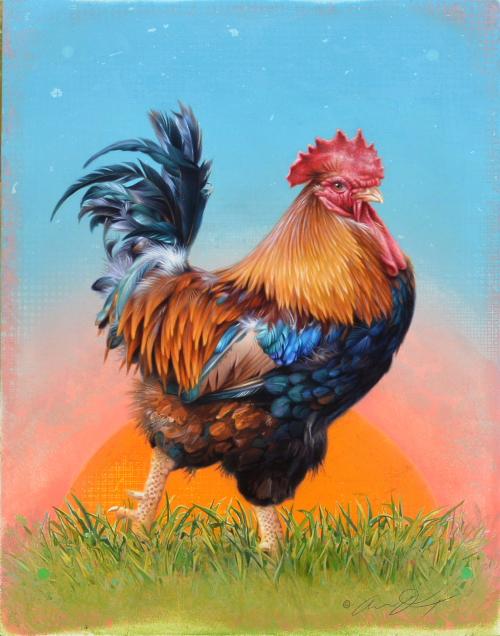 Cockerel by Andrew Denman