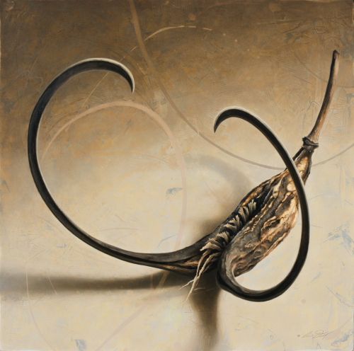 Devil's Claw Seed Pod by Andrew Denman