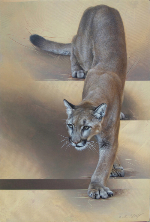 Mountain Lion by Andrew Denman