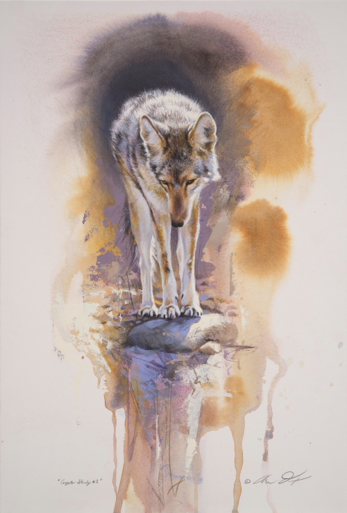Coyote Study by Andrew Denman