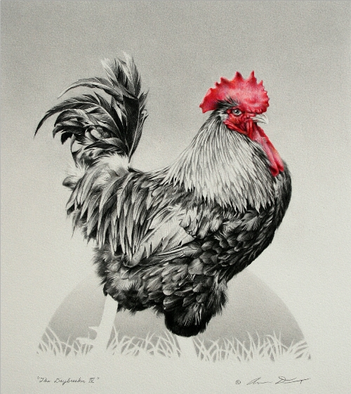 Rooster Drawing by Andrew Denman