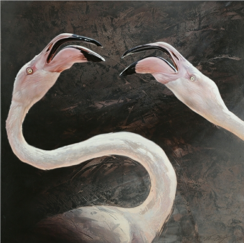 Greater Flamingos, Fighting by Andrew Denman