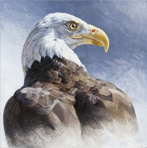 Bald Eagle by Andrew Denman