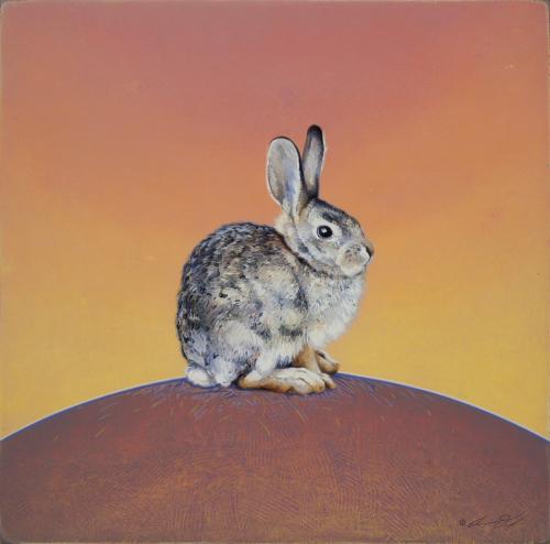 Desert Cottontail Rabbit by Andrew Denman