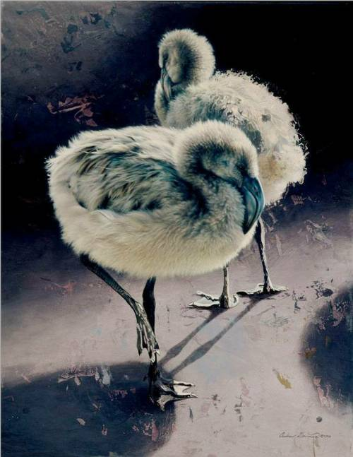 Chilean Flamingo Chicks by Andrew Denman