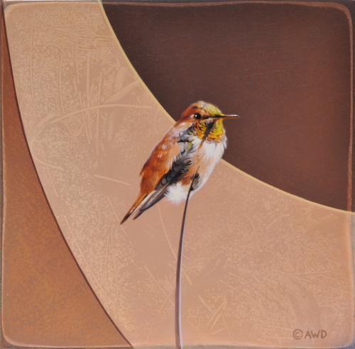 Rufus Hummingbird by Andrew Denman
