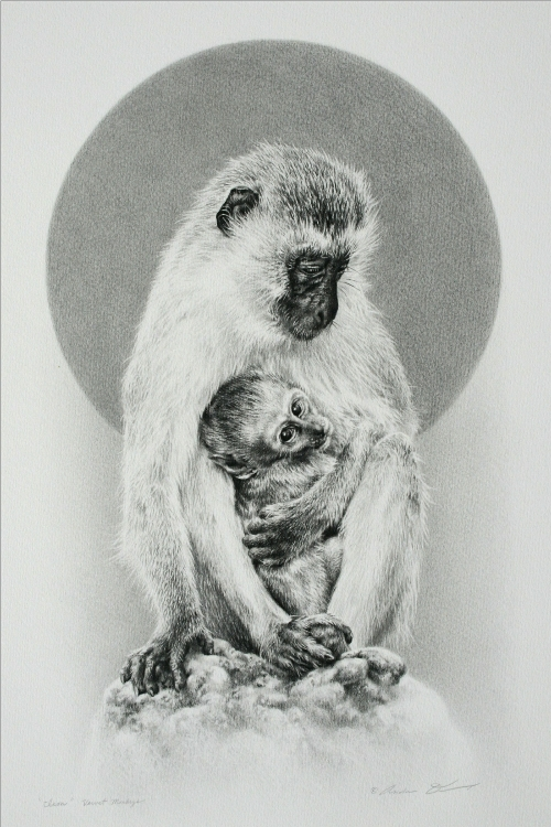 Vervet Monkey Female with Young by Andrew Denman