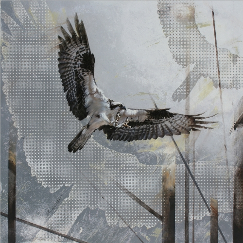 Osprey by Andrew Denman