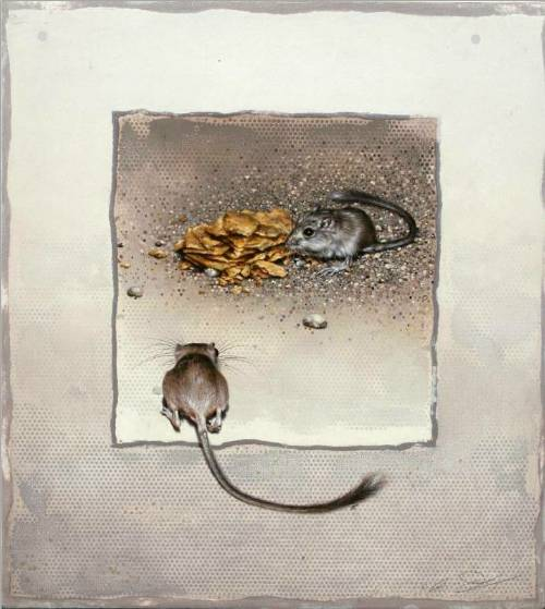 Desert Pocket Mice by Andrew Denman