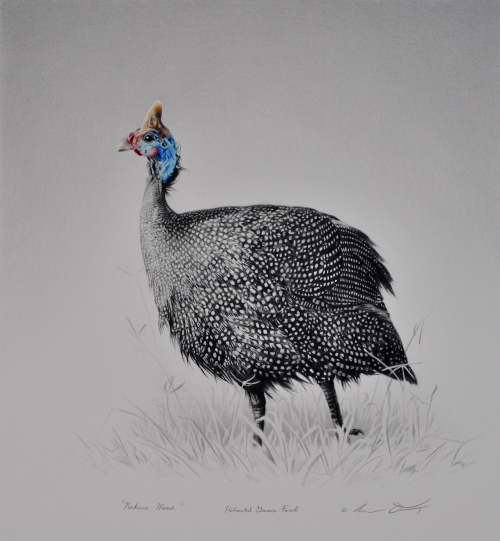 Helmeted Guinea Fowl by Andrew Denman