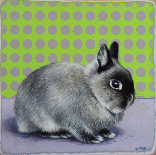 Netherlands Dwarf Rabbit by Andrew Denman