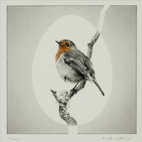 European Robin Drawing by Andrew Denman