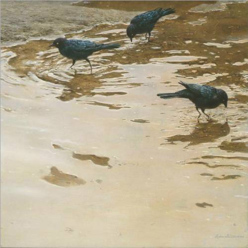 Brewer's Blackbirds by Andrew Denman
