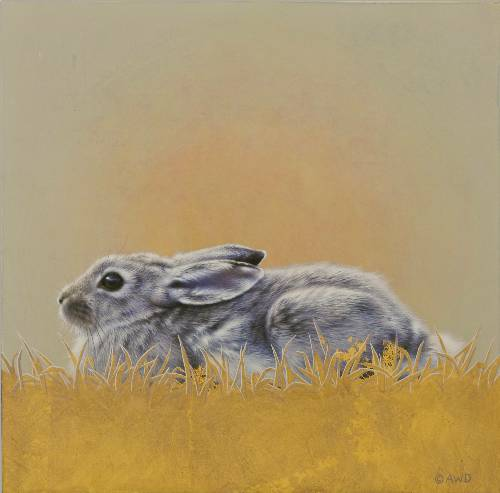 Cottontail by Andrew Denman