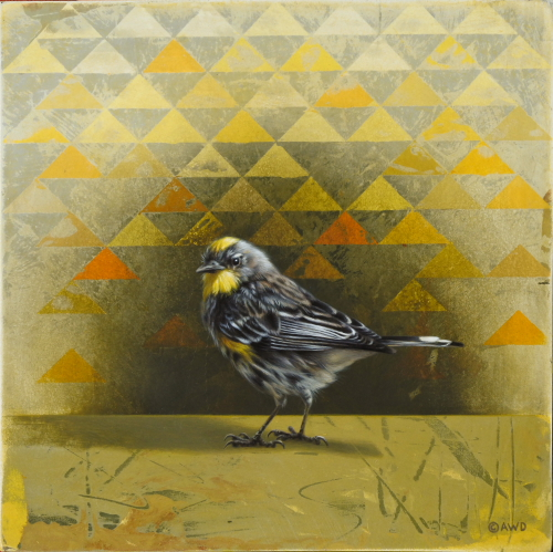 Yellow-Rumped Warbler by Andrew Denman