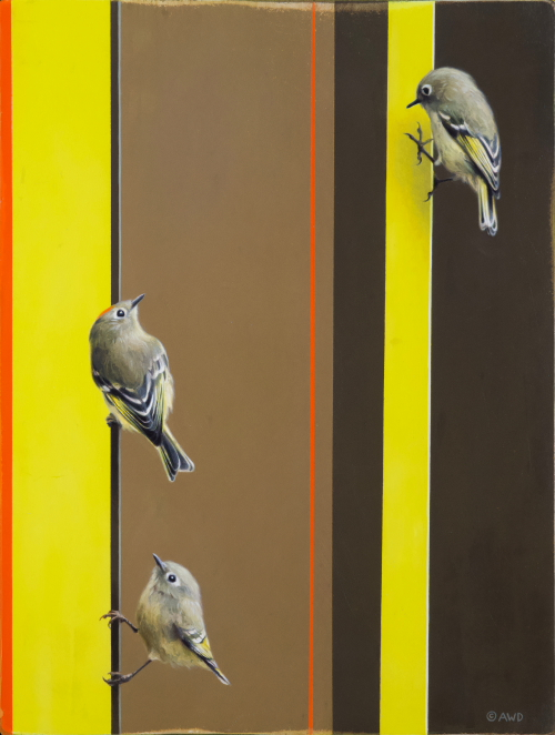 Ruby-Crowned Kinglets by Andrew Denman