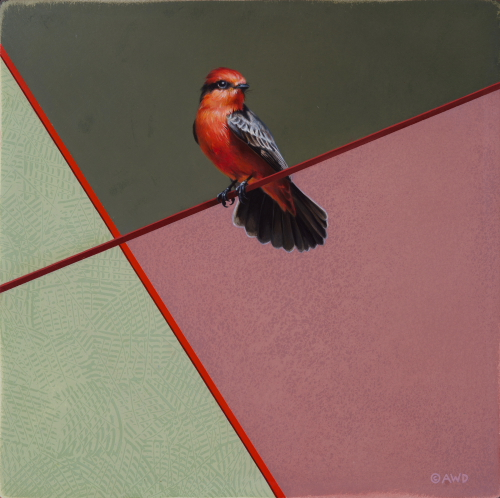 Vermilion Flycatcher by Andrew Denman