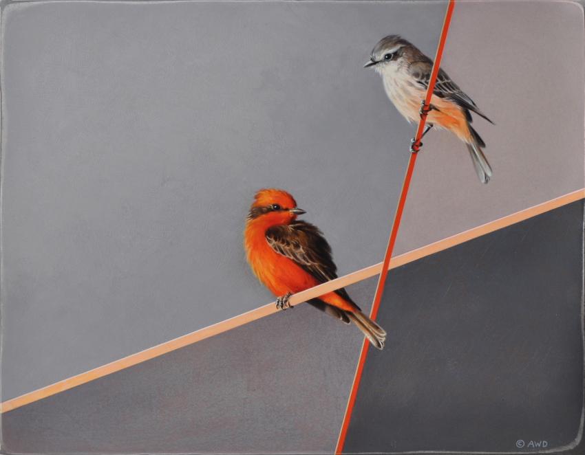 Vermilion Flycatchers by Andrew Denman
