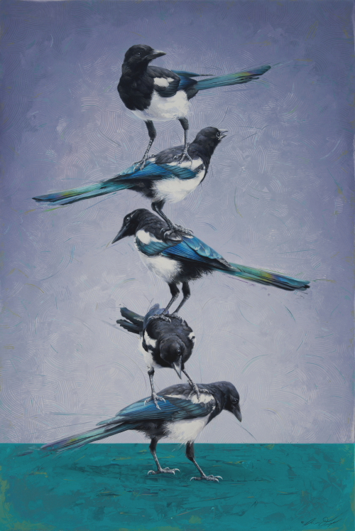 Black-billed Magpies by Andrew Denman