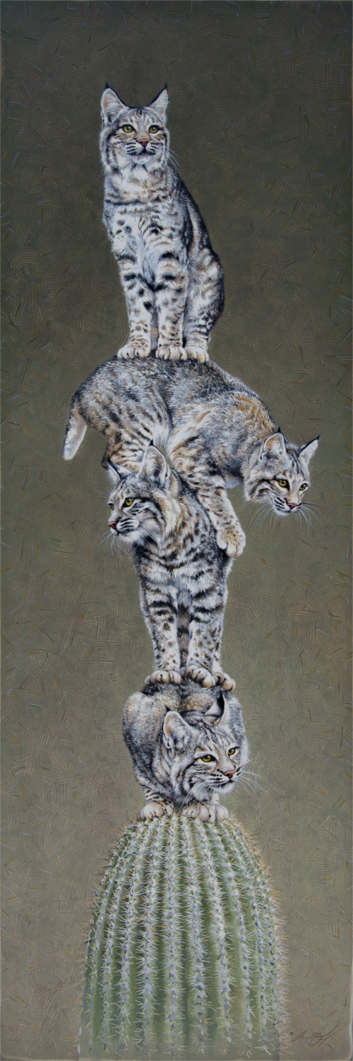 Stacked Bobcats by Andrew Denman